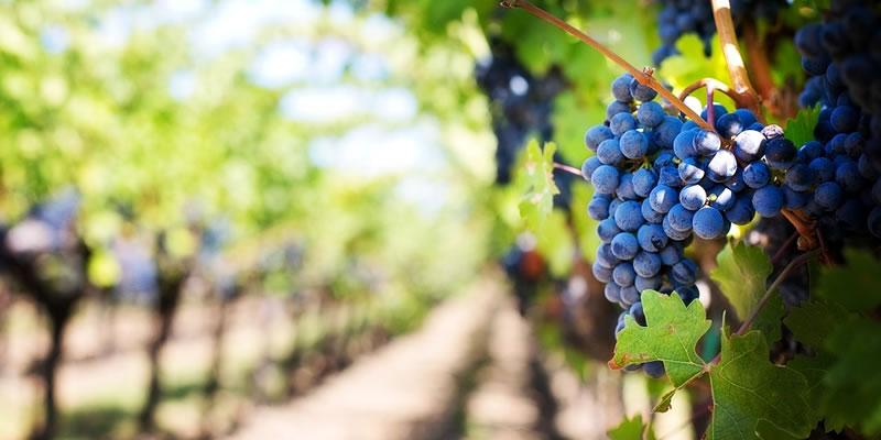 Viñas de Chile elegidas dentro de las 50 mejores del mundo