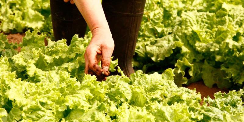 Mejorando las prácticas laborales en la agricultura