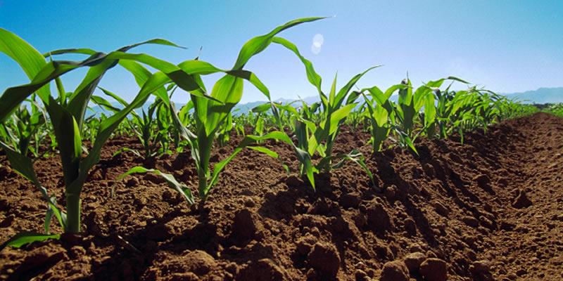 Región de Los Ríos se pone al día en agricultura familiar campesina