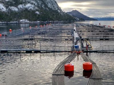 Salmón, krill y algas: Innovación en excedentes marinos abre nuevas oportunidades de negocios