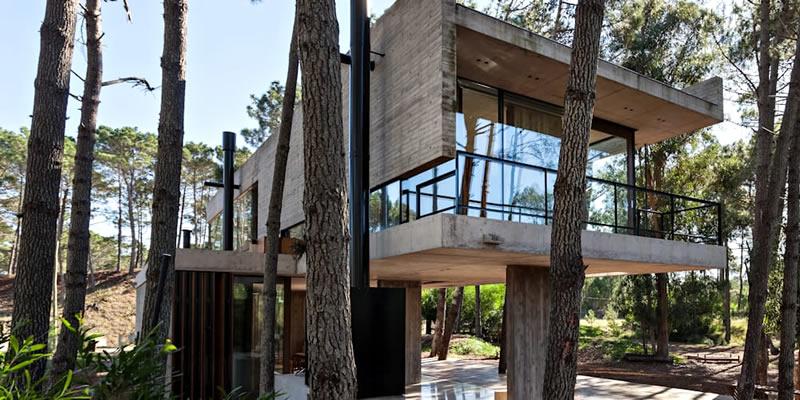 Desarrollan primeras construcciones con eucalyptus nitens